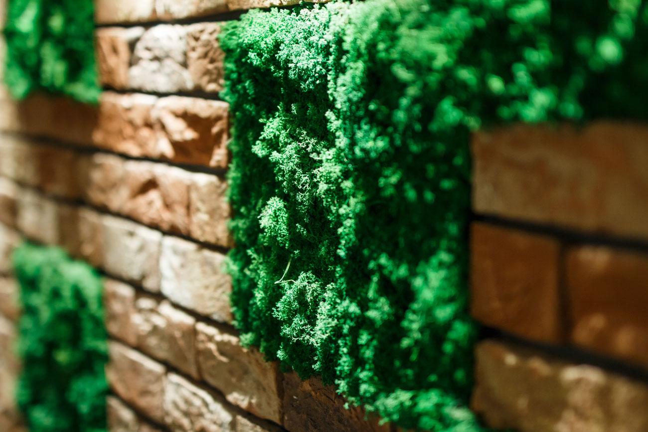 Zielone Sciany Z Mchu Verde Art