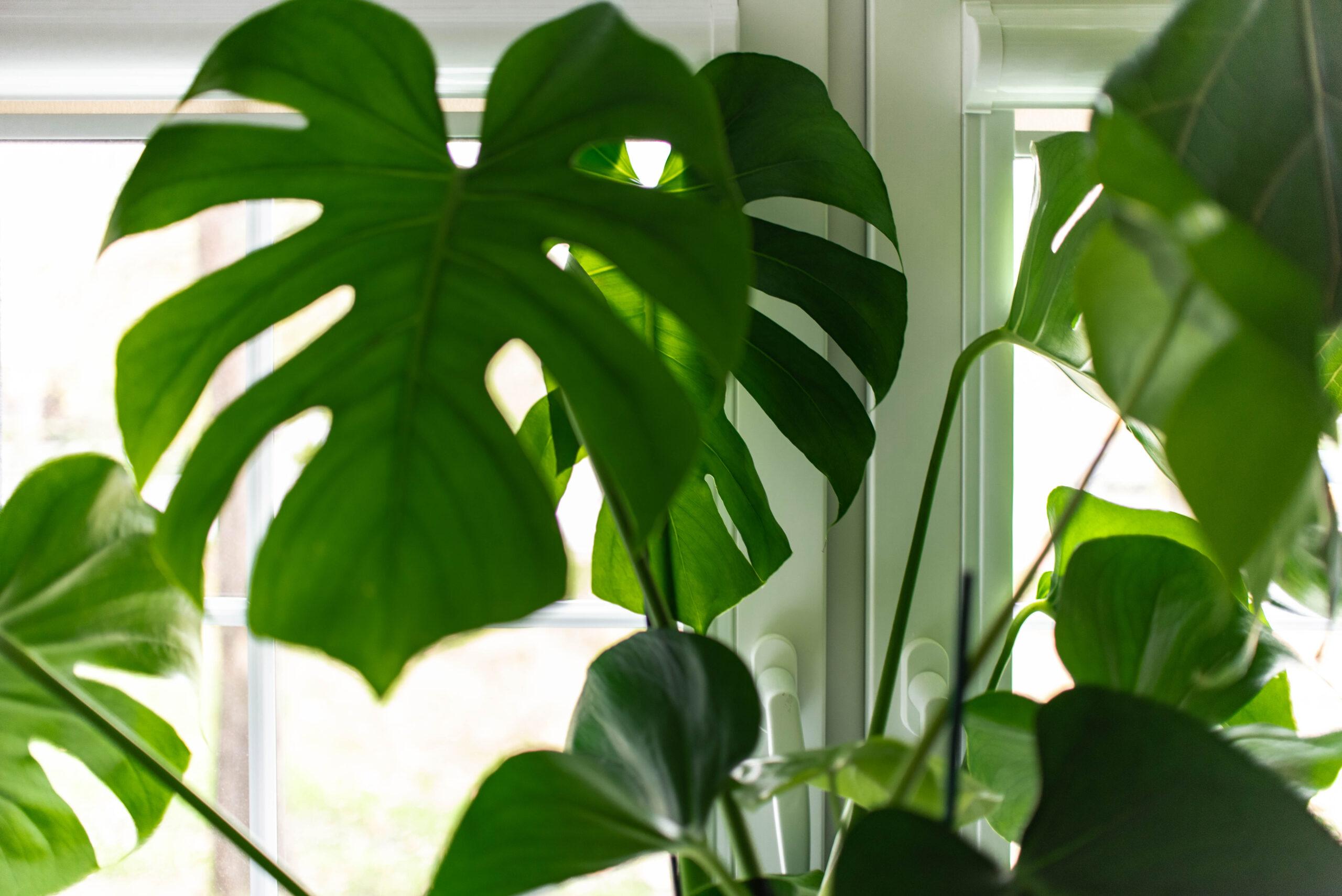 zielen w biurze wroclaw